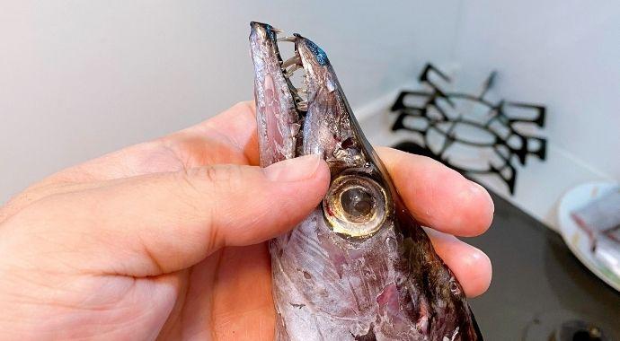 太刀魚の歯